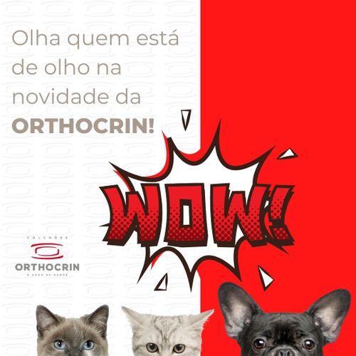 novidade-orthocrin-base-pet